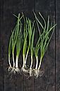Row of spring onions on dark wood - DEGF000666