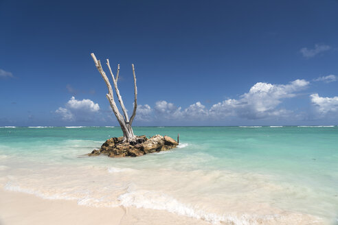 Dominican Republic, Punta Cana, dead tree trunk in the ocean, Playa Bavaro - PCF000248