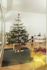 Decorated Christmas tree in family living room - MFF002792