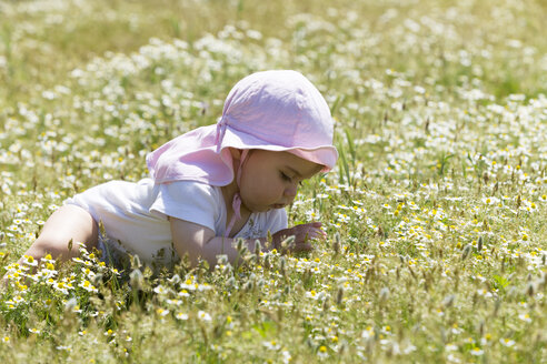 Baby girl on flower meadow - DSF000636