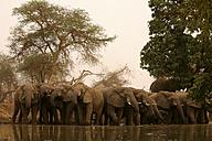 Chad, elefants at waterhole - DSGF001099