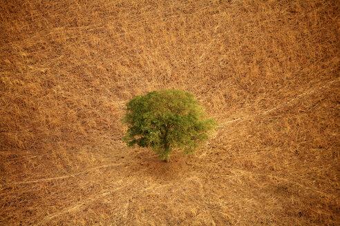 Chad, Zakouma National Park, Acacia desolate in the savannah - DSGF001108