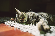 Portrait of tabby cat relaxing on a carpet at home - RAEF000941