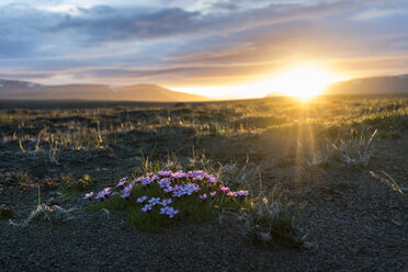 Iceland, Golden Circle National Park at midnight sun - PAF001667