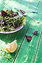 Spring salad of baby spinach, herbs, arugula and lettuce - DEGF000714