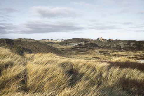 Denmark, Henne Strand, Dune landscape - BMA000156