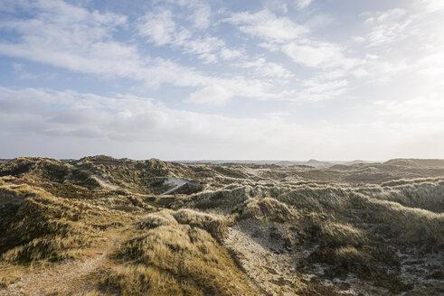 Denmark, Henne Strand, Dune landscape - BMA000177