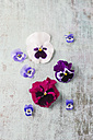 Edible pansies and violets - MYF001432