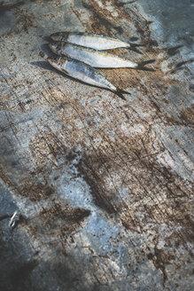 Raw sardine fish - DEGF000769