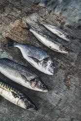 Raw fish, Sea bream, sea bass, mackerel and sardines - DEGF000772
