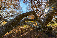 Italy, Marche, Foliage in the forest in autumn - LOMF000251