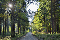 Germany, Saxony, Saxon Switzerland National Park, Forest cart road with sun, Kirnitzsch Valley, Saxon Switzerland National Park - RUEF001694