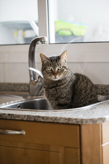 Tabby cat sitting in the kitchen sink - RAEF000970