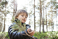 Portrait of little boy playing with conifer branch in the woods - VABF000390