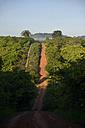 Brazil, Para, Amazon rainforest, dirt road - FLKF000663