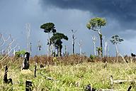 Brazil, Para, Itaituba, Amazon rainforest, slash and burn, reclamation of pastureland - FLKF000678