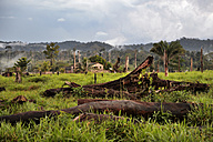 Brazil, Para, Itaituba, Amazon rainforest, slash and burn, reclamation of pastureland - FLKF000681