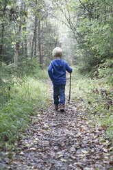 Back view of little blond boy walking on a forest track - RBF004243