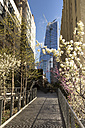 USA, New York, Manhattan, High Line Park, footbridge and flowering trees, new building - FCF000873