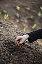 Sowing hand - NDF000580