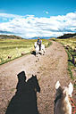 Peru, Cusco, man riding horse on dirt road surrounded by sheeps - GEMF000855