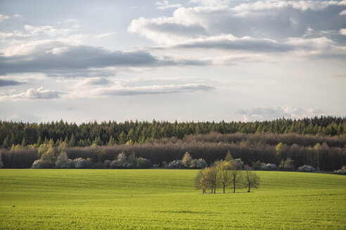 Germany, Brandenburg, Flaeming, field and group of trees, evening light - ASCF000570