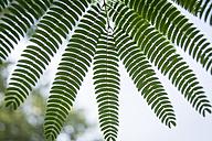 Nature, fern leave - JUNF000482