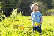 Smiling baby girl on meadow picking dandelions - WWF003945