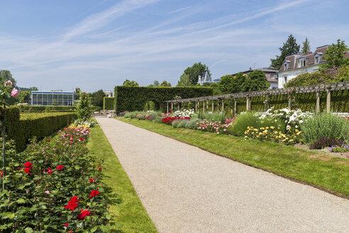 Germany, Baden-Baden, Lichtentaler Allee, park with roses in summer - JUN000493