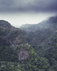 spain, Canary islands, Los Tilos, laurel forest and fog - DWIF000714