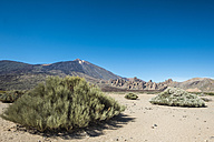 Spain, Tenerife, landscape and vegetation in El Teide region - SIPF000371