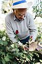 Senior man cutting rose in the garden - JRFF000570
