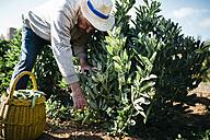 Senior man picking beans in his garden - JRFF000582