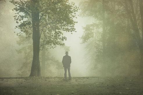 Gernany, North Rhine-Westphalia, Rear view of man standing in foggy landscape - DWIF000728
