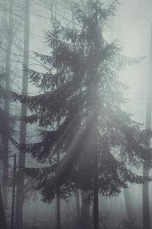 Gernany, North Rhine-Westphalia, Tree in back light - DWIF000734