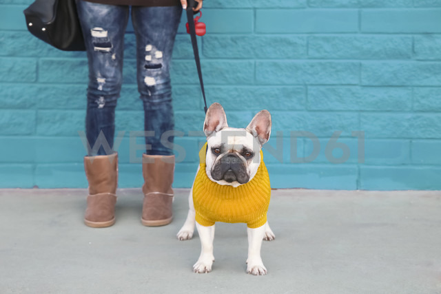 Portrait of French bulldog wearing yellow knit pullover - RTBF000173 - Retales Botijero/Westend61