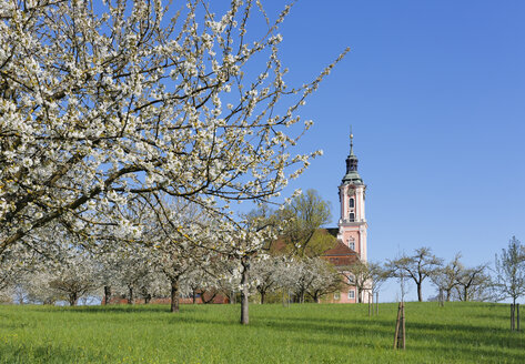 Germany, Birnau, Birnau Basilica, flowering cherry tree in the foreground - SIEF007005