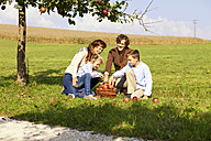Family harvesting apples on rural meadow - MAEF011633