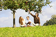 Family harvesting apples on rural meadow - MAEF011639