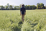 Back view of man walking on a meadow - GIOF000993