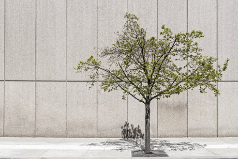 Solitary tree in front of concrete wall - MELF000113