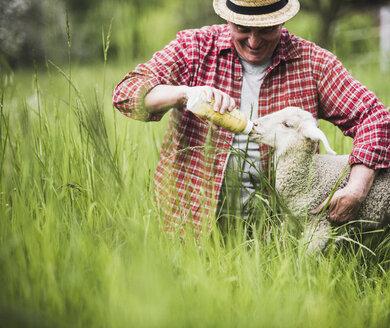 Shepherd feeding lamb with milk bottle - UUF007316