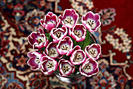 Tulips in a vase - JTF000737