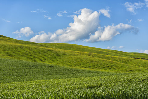 Italy, Tuscany, Val d'Orcia, view to fields and rolling landscape in spring - LOMF000269