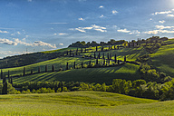Italy, Tuscany, Val d'Orcia, road with cypresses in spring - LOMF000272