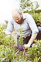 Young man working in garden, sowing plants - SEGF000559