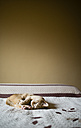 Cat resting on a bed - RAEF001181