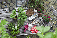Gardening, different medicinal and kitchen herbs and gardening tools on garden table - GWF004708