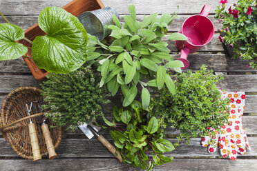 Gardening, different medicinal and kitchen herbs and gardening tools on garden table - GWF004711