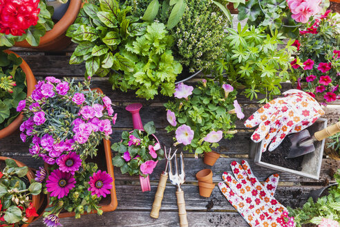 Gardening, different medicinal and kitchen herbs and gardening tools - GWF004714